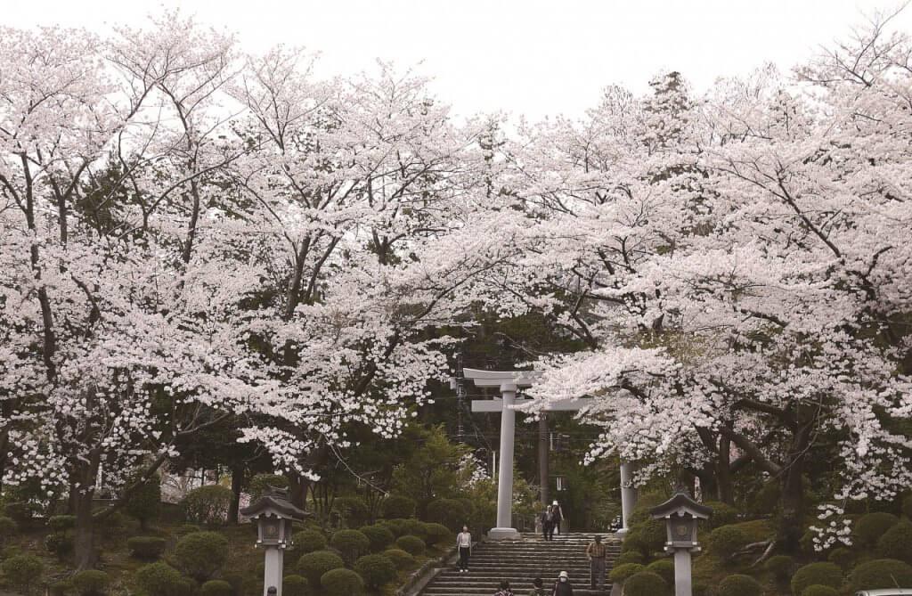 休日すぐ行ける! 新潟のすごい桜4選